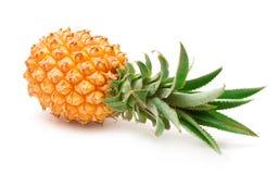 Free Pineapple (ananas) Stock Photography - 13148912