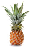 Pineapple Ananas Fruit Royalty Free Stock Photos