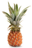 Pineapple Ananas Fruit Stock Image