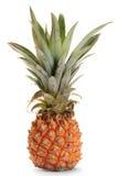 Pineapple ananas fruit Stock Image