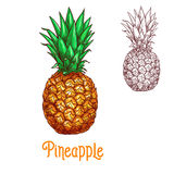 Pineapple ananas fruit vector sketch isolated icon. Pineapple fruit sketch. Vector isolated icon of fresh whole exotic tropical ananas citrus fruit for jam and royalty free illustration
