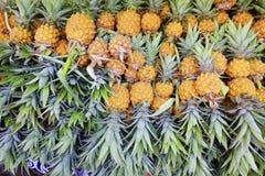 Pineapple arrange for sale. Pineapple arrange on vender for sale stock images