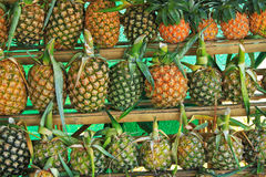 Pineapple background Royalty Free Stock Photos