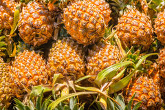 Pineapple background. A lot of tropical pineapple fruit Royalty Free Stock Photos