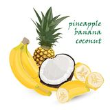 Pineapple, banana, coconut, whole and pieces with palm leaves isolated on white background. Colorful botanical vector ilustration. Stock Photography