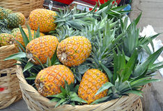 Pineapple Basket. Pineapples for sale in the local Nicaraguan Market royalty free stock photography