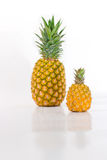 Pineapple Big and Small Royalty Free Stock Images