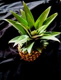 Pineapple. On black background Royalty Free Stock Photo