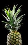 Pineapple on black Royalty Free Stock Image