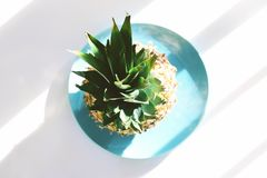 Be strong and round and green and ripe. Pineapple on a Blue plate on a white counter top in the middle of games light and shadow Royalty Free Stock Image
