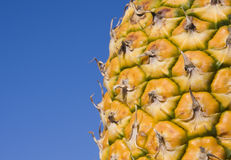 Pineapple and Blue Sky. A close up of a pineapple against a deep blue sky Stock Photography