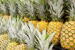 Pineapple close up Royalty Free Stock Photo