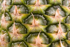 Pineapple close up 3 stock photography