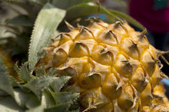 Pineapple Closeup Stock Photos