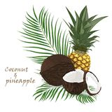 Pineapple, coconut, whole and pieces with palm leaves isolated on white background. Colorful botanical vector ilustration. Vintage Royalty Free Stock Photography