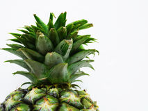 Pineapple cone Royalty Free Stock Image