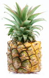 Pineapple cube Stock Photo