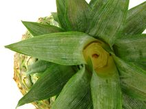 Pineapple detail Royalty Free Stock Photo