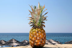 Pineapple And Exotic Beach. Whole pineapple against tropical background. Selective focus Royalty Free Stock Images