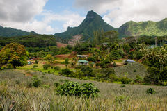 Pineapple farm in Moorea Royalty Free Stock Photos