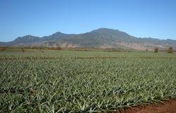 Pineapple field landscape Hawaii stock photo