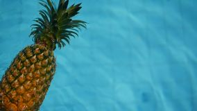 Pineapple Floating In blue Water In Swimming Pool. Healthy Raw Organic Food. Juicy Fruit. Exotic tropical background stock footage