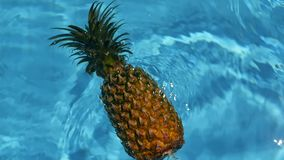 Pineapple Floating In blue Water In Swimming Pool. Healthy Raw Organic Food. Juicy Fruit. Exotic tropical background stock video