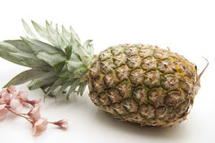 Pineapple with flower Royalty Free Stock Photography