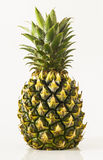 A Pineapple Stock Image