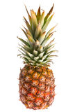 Pineapple fruit Royalty Free Stock Photo