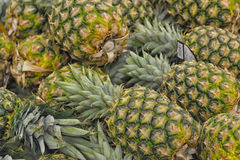 Pineapple fruit background Stock Images