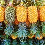 Pineapple fruit background Royalty Free Stock Photos