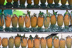 Pineapple Fruit Display For Sell On Small Street In Malwana Royalty Free Stock Photos