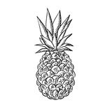 Pineapple fruit with fresh leaves in sketch style Royalty Free Stock Photography