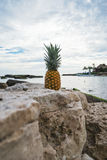 Pineapple Fruit on Gray Rock Stock Image
