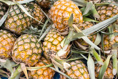 Pineapple fruit Royalty Free Stock Photos
