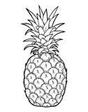 Pineapple fruit hand draw illustration Royalty Free Stock Image