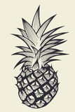 Pineapple fruit Hand drawn Royalty Free Stock Photography