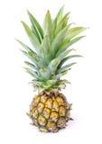 Pineapple. Stock Photos