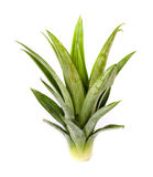 Pineapple. Stock Photography