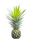Pineapple fruit isolated on white Stock Photo