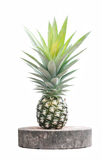 Pineapple fruit isolated on white Royalty Free Stock Photography