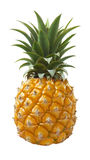 Pineapple fruit isolated on white background. As package design element Royalty Free Stock Image