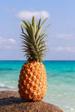 Pineapple fruit on sand against turquoise water. Similan Islands Thailand. Tropical summer vacation concept. Pineapple fruit on sand against turquoise water Stock Photography