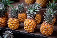 Pineapple Fruit and Shallow Depth of Field. Pineapple Fruit and Shallow Depth of Field royalty free stock images