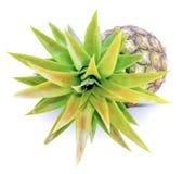Pineapple fruit on white background stock image