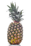 Pineapple Fruit on White Stock Image