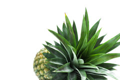 Pineapple. Fruite from tropical test sweet and sour Royalty Free Stock Images