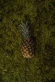 Pineapple on green grass Royalty Free Stock Images