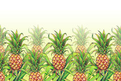Pineapple with green leaves tropical fruit growing in a farm. Pineapple drawing markers seamless pattern frame border. Colour illu Royalty Free Stock Photos